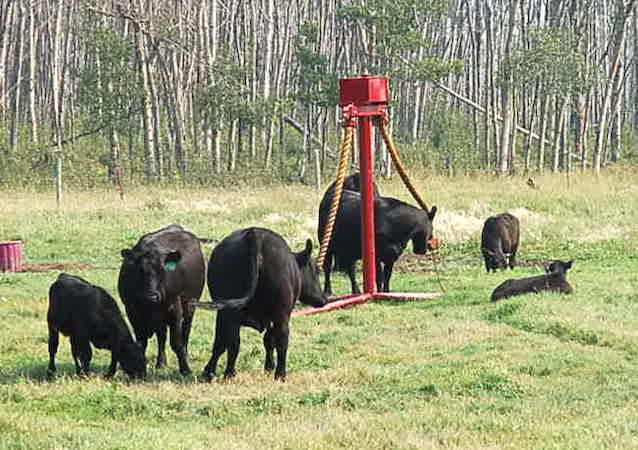 ClearFab Manufacturing CATTLE OILERS